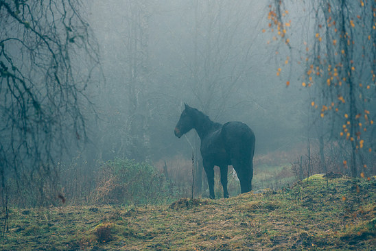 Autumn fog with horse