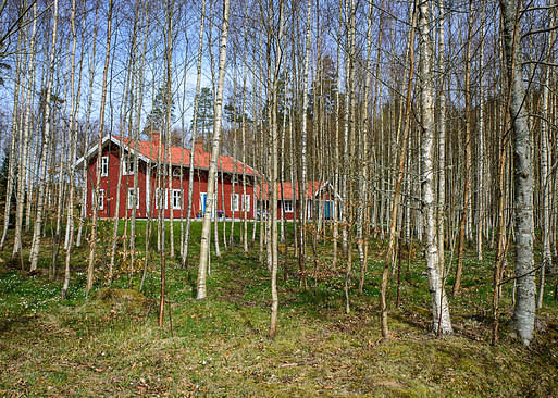 Swedish house between poplars