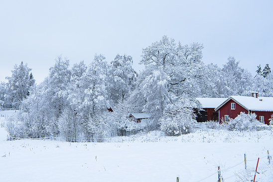 I have dreamed about a small red house in the winter