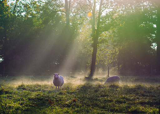 Autumn in the Swedish countryside with sheep