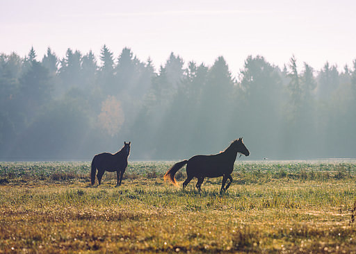 Autumn in the Swedish countryside with horses